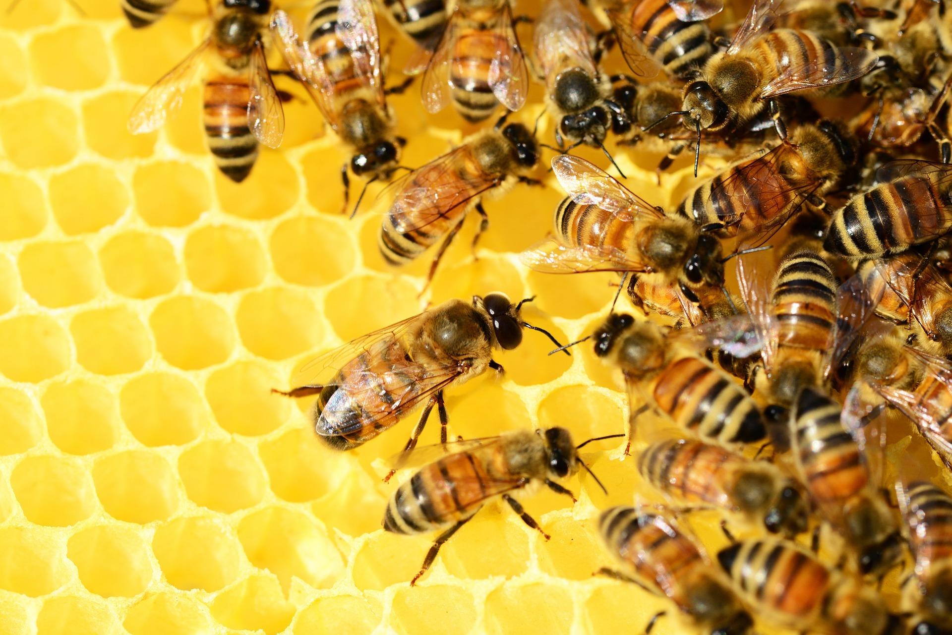 Praxisbericht – Der digitale Bienenstock